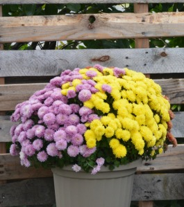 potted-flowers