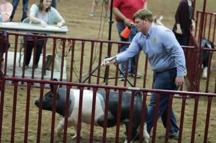 Spencer in the sale ring 2 Tulsa 2018